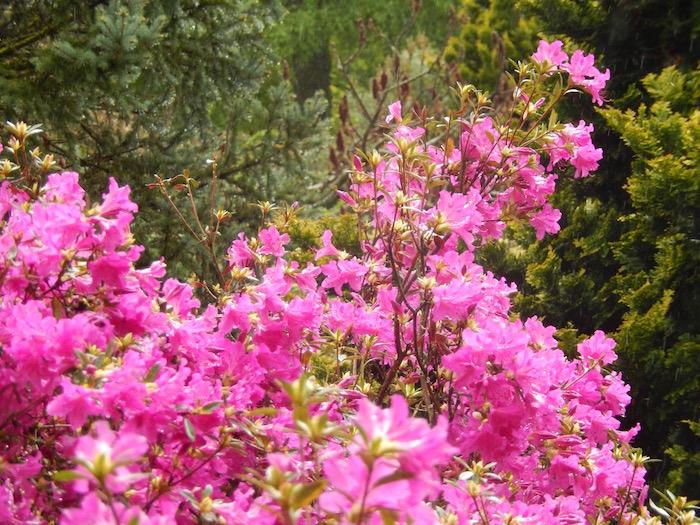 Jardins de Callunes