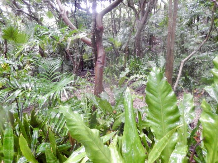 A travers la forêt tropicale