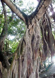 Parque de la Ceiba Playa del Carmen