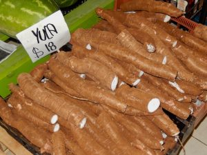 Yuca ou Radis noir