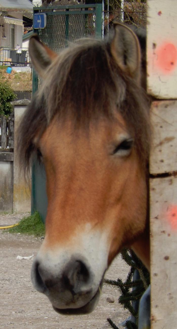 Foire de Saint-Loup sur Semouse