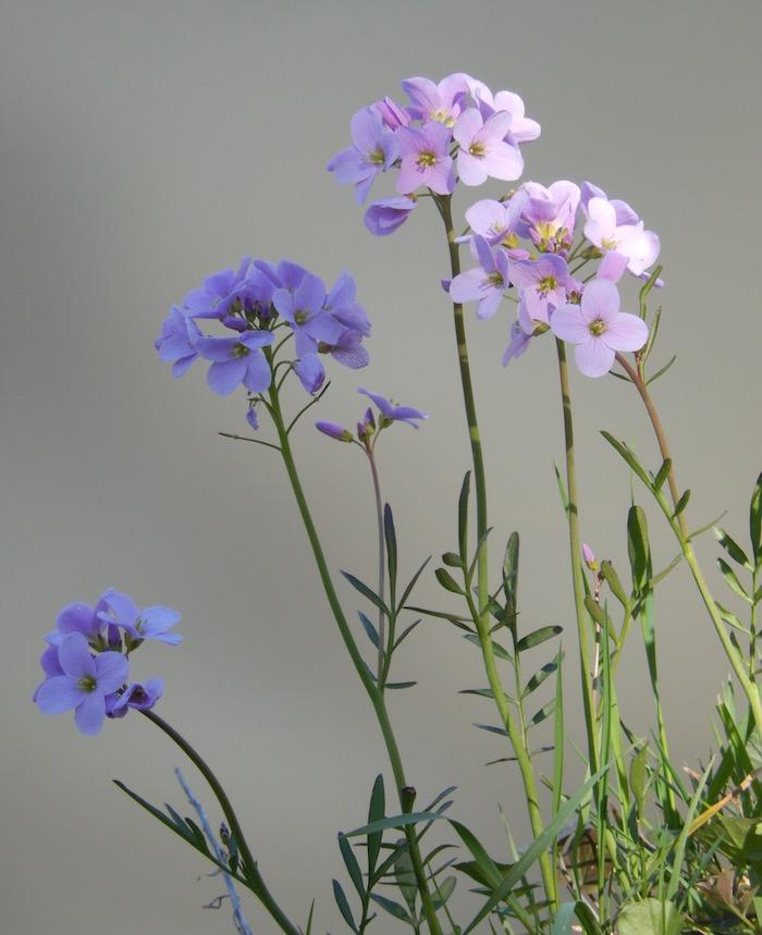 La Vôge en fleurs